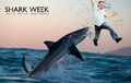 Shark week with brian.png